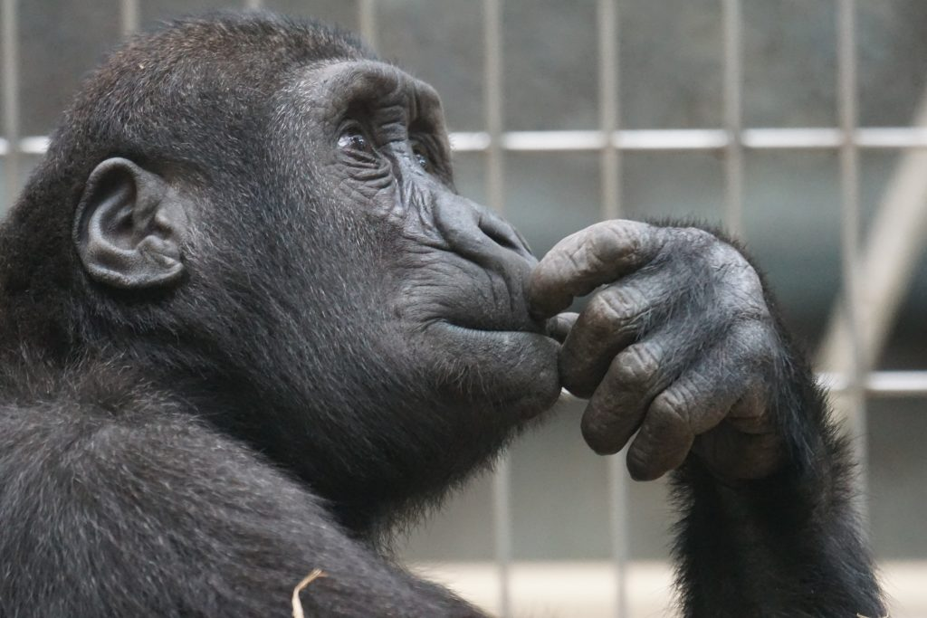 Thinking about something