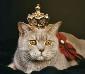 A cat wearing a crown, showing how she doenst need anything from anyone