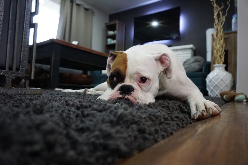 lazy dog. how to stop procrastinating.